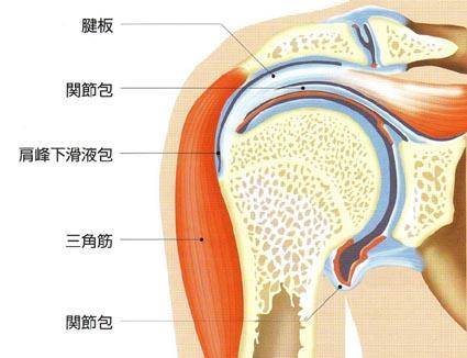 関節包の説明画像